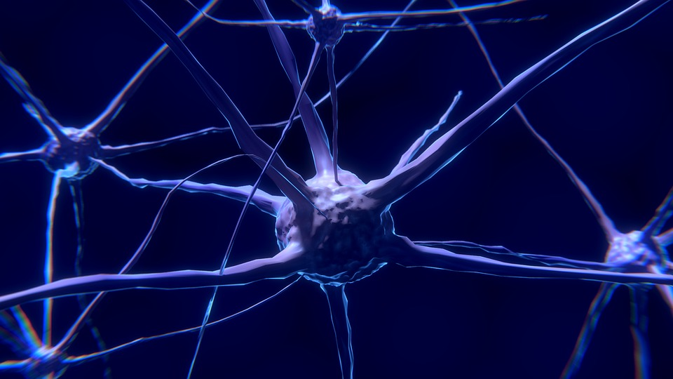 nerve-cell-2213009_960_720