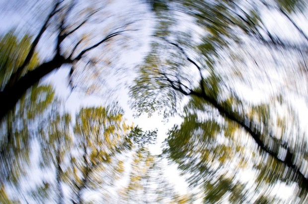 forest-1366345_960_720